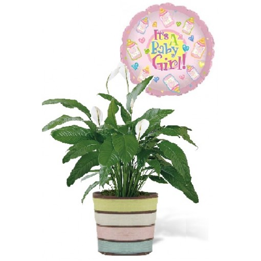 A Peace Lily Baby Girl Plant Gift