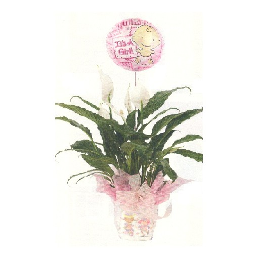 """Diaper Dandy"" Plant for Boy or Girl with Baby Mylar"
