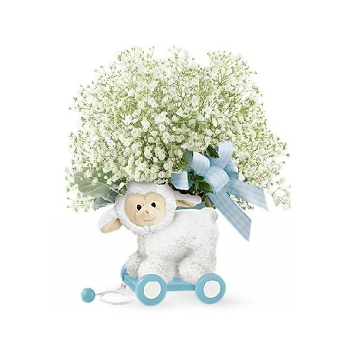 Baby Boy Babies Breath Lamb by Teleflora