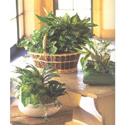 Dish Garden/Planter Sympathy Gift