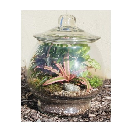 "Our ""Trendy Terrarium"" with Lid"