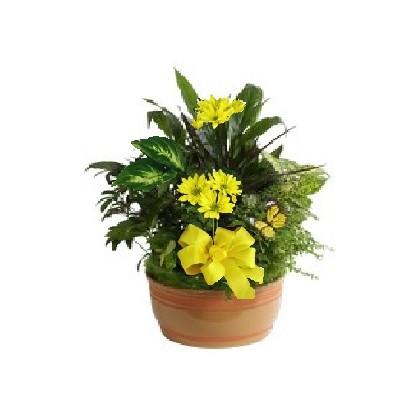 Dish Garden/Planter Gift