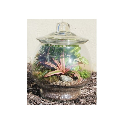 """Our """"Trendy Terrarium"""" with Lid"""
