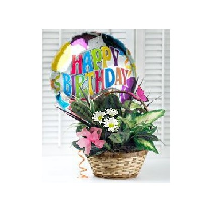 """Happy Birthday"" Dish Garden"